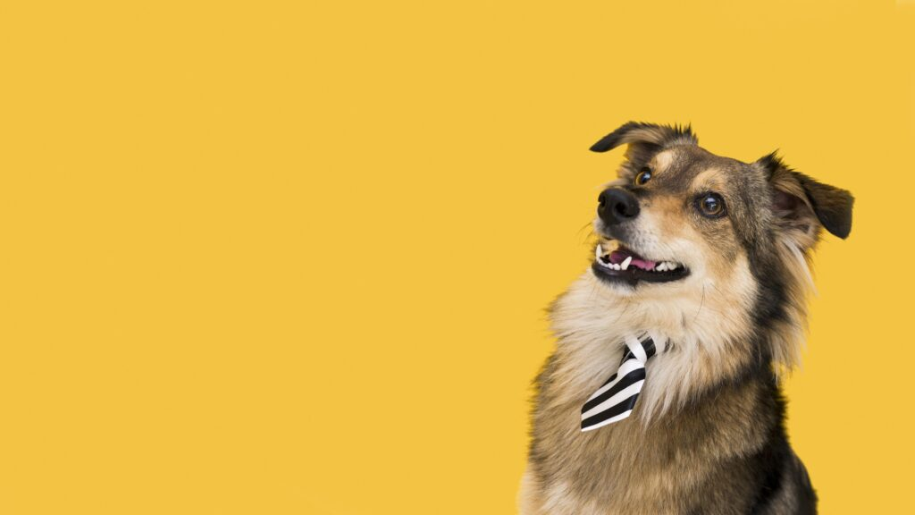 Perro con corbata